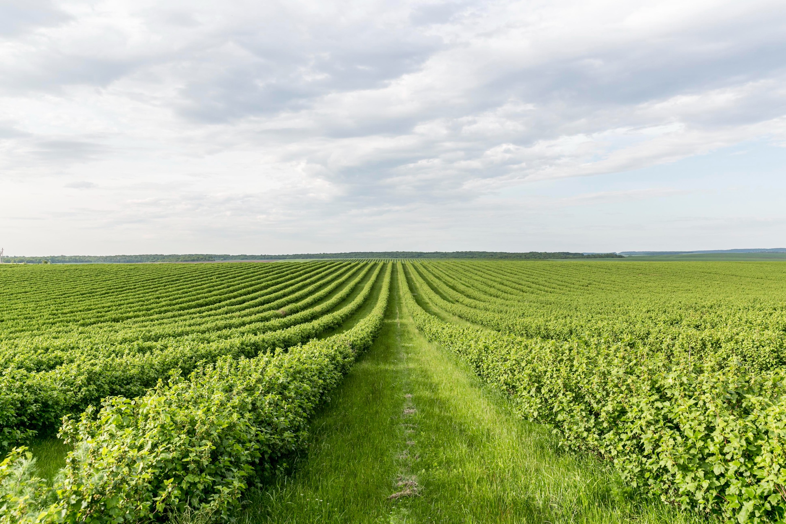 How the Dutch have revolutionised farming!